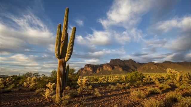 5 legendary tales of lost gold in Arizona