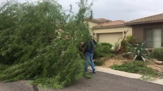 Storm downs tree in Gold Canyon