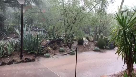 Rain pours at Desert Botanical Garden