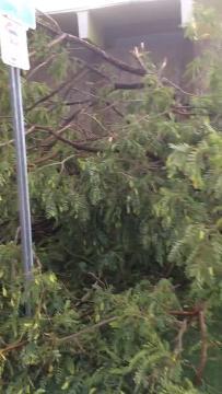 Daños por tormenta en Phoenix