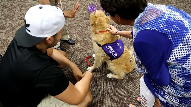 The new Navigator Buddies program at Sky Harbor International Airport brings therapy dogs into the terminals to shower puppy love on passengers and visitors alike.   Tom Tingle/azcentral.com