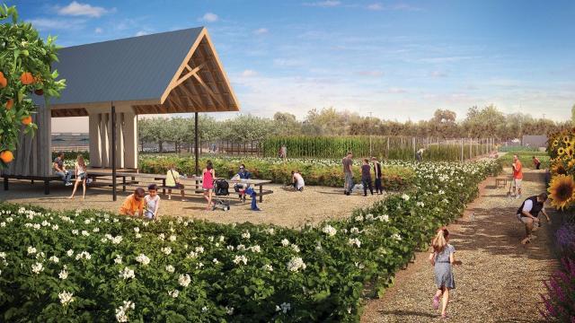 The Farm at Los Olivos: A vision of urban farming in Phoenix