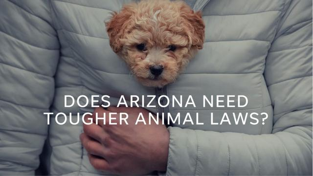 Some animal activists are working with the Arizona Legislature to toughen animal-cruelty penalties.