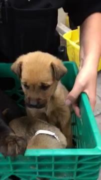 Five puppies were rescued after being abandoned near South Mountain and Third avenues in Phoenix. They'll be up for adoption for $150 each on Feb. 17, 2018.