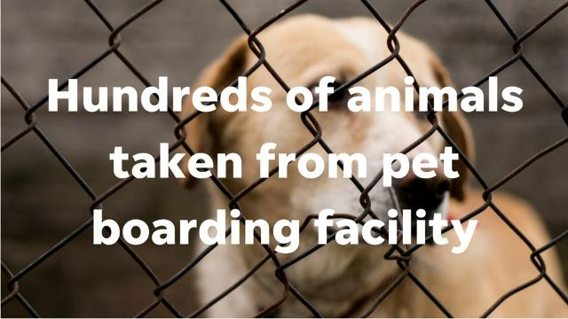 Arizona Humane Society spokeswoman Bretta Nelson says many animals were sick and emaciated after being seized from a pet-boarding facility in Phoenix.