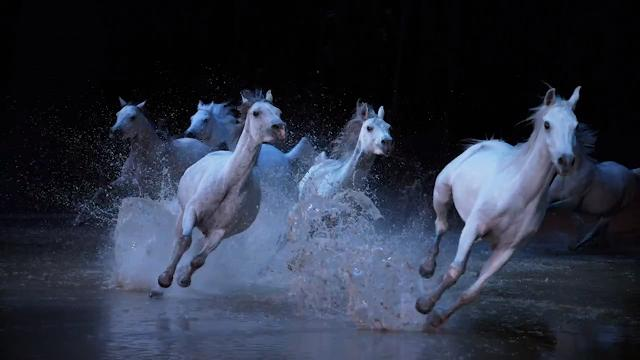 "Seventy horses and 50 riders, acrobats, dancers and musicians will take the stage in Scottsdale in ""Odysseo."" Cavalia"
