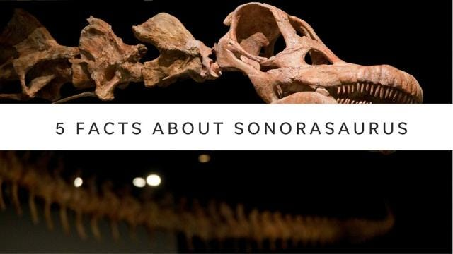 If Senate Bill 1517 is approved, Sonorasaurus would join other official Arizona state symbols, including the bola tie (official neck wear) and the Colt single action revolver (state firearm). azcentral