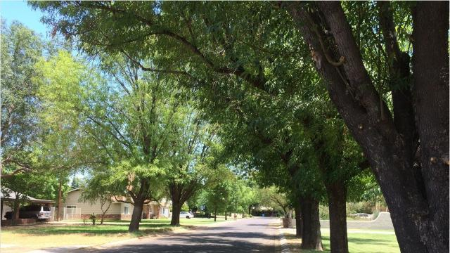Here's why your allergies are bothering you despite a dry winter in Arizona