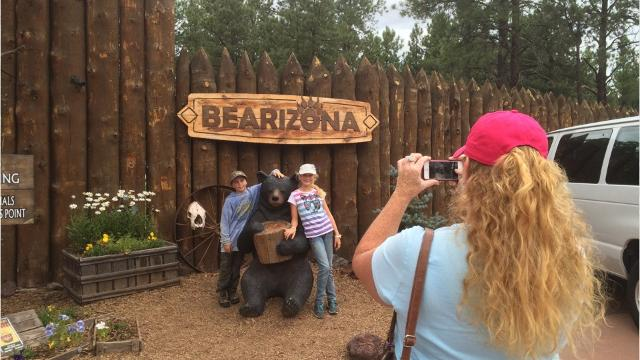 Visit Bearizona in Williams, AZ, where bears, wolves and bison reside. Take a look at the 5 things you must do when visiting Bearizona.