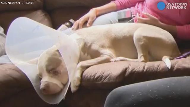Family says officer shot their dogs without provocation