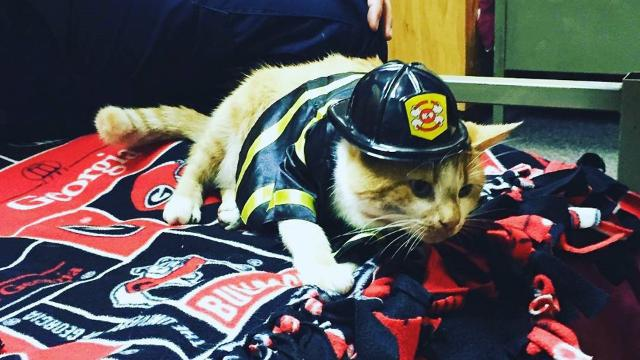 Stray cat becomes internet star after joining the fire department