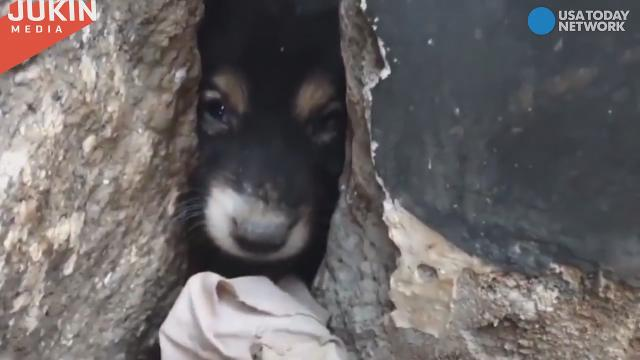 Tiny puppy rescued from wall will melt your heart