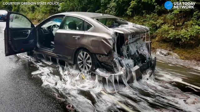 Sloppy slime eel spill stops traffic
