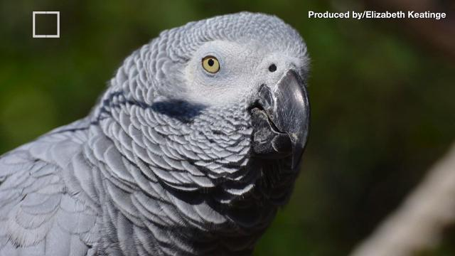 Woman found guilty in murder witnessed by parrot