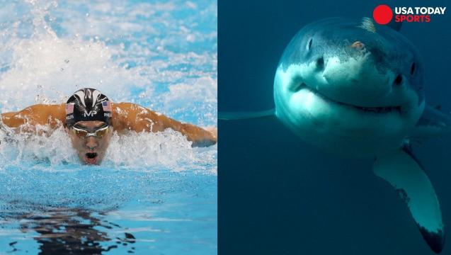 Michael Phelps races fake shark and Twitter wasn't having it