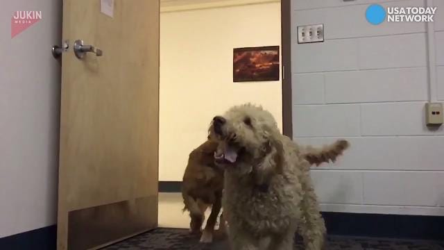 These dogs are slow-motion sliding into our hearts