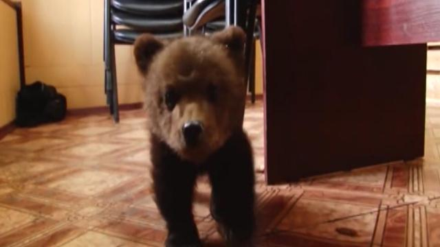 Adorable orphaned cub gets new home