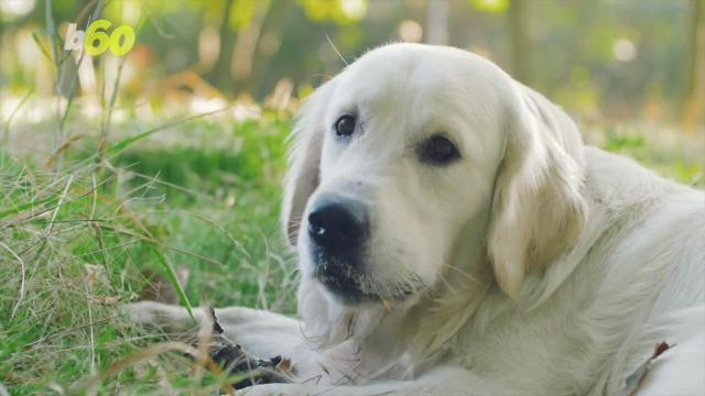 This may be why your dog is eating grass