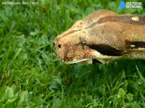 Woman attacked by snake, says 'blood everywhere'