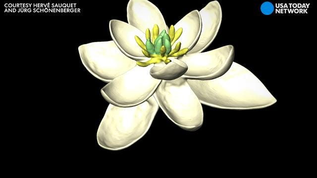 Prehistoric petals: Scientists reveal what the first flower looked like