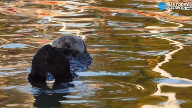 This floating otter is peak relaxation goals