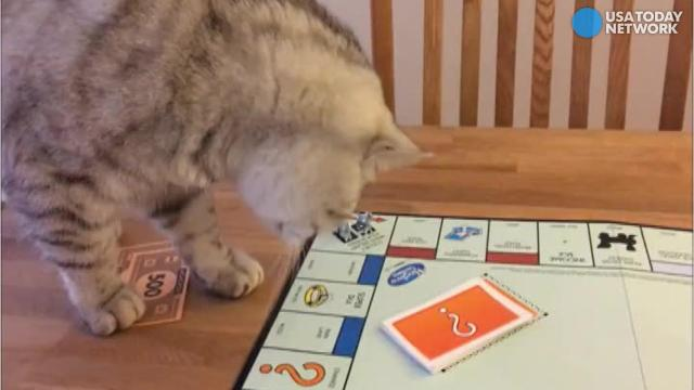 This Cat S Determined To Master Monopoly