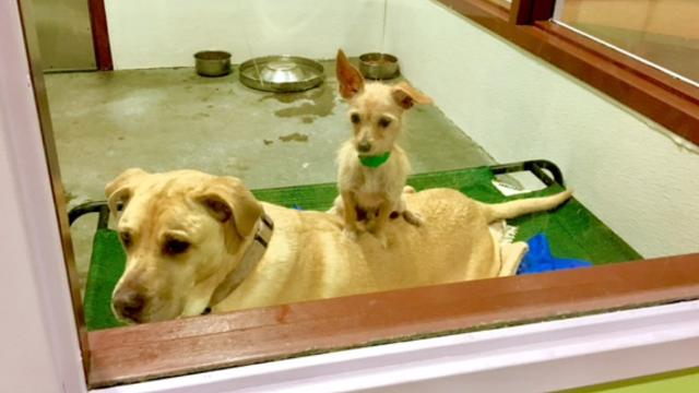 Stray dogs form unbreakable bond of friendship