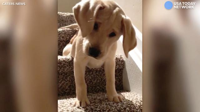 Nervous pup tackles stairs for the first time
