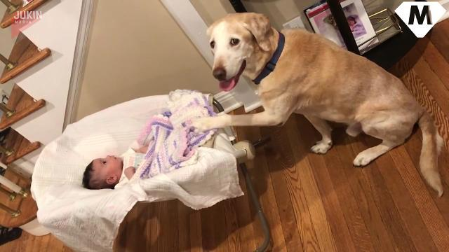 Move over nanny: This K9's an expert at baby bedtime