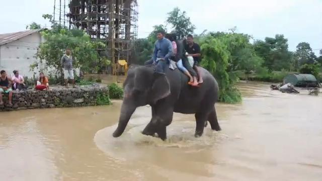 Elephants help Nepal tourists escape flooding