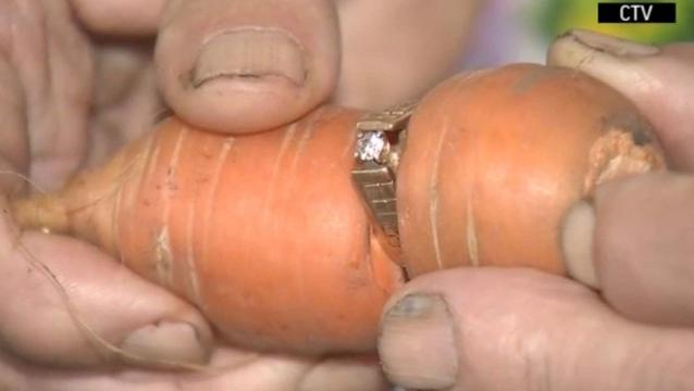 Lost Engagement ring found wrapped around carrot