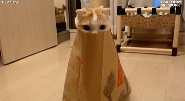 Curious cat plays peekaboo in paper bag