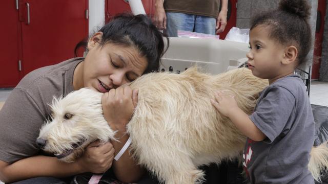 Cómo proteger a sus mascotas durante el Huracán Irma - USA today 1