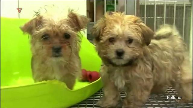 CDC: People sick after contact with puppies at Petland stores
