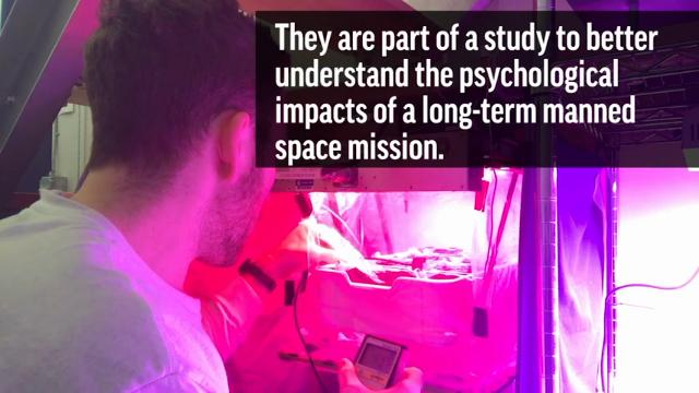 Psychology experiment kept six NASA subjects isolated on a Mars-like volcano for 8 months
