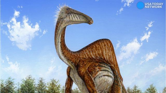 Preserved poop reveals the diet of a group of dinosaurs