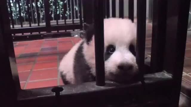 Tokyo names its newest baby panda