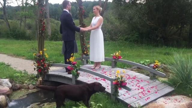 Stray dog crashes outdoor wedding