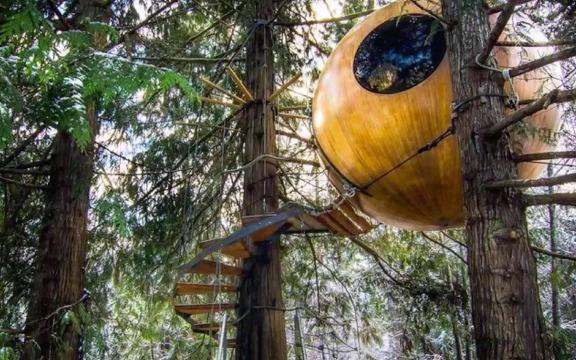 If you like treehouses, check out these treetop bubble hotel rooms