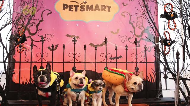 This year's hottest Halloween costumes for your pet!