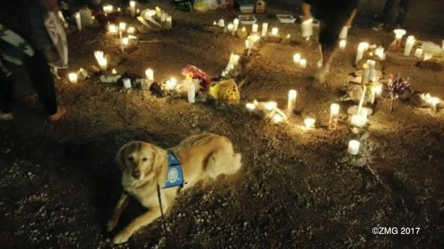 Dogs bring comfort to Las Vegas community