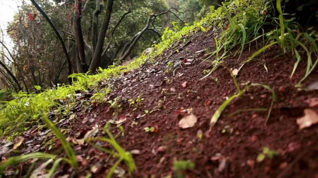 Study: Carbon emissions in soil may bring 'unstoppable global warming'