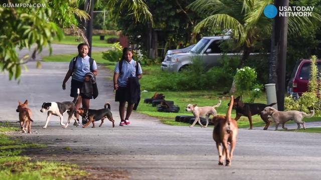 More than 25K dogs are on the loose in Guam