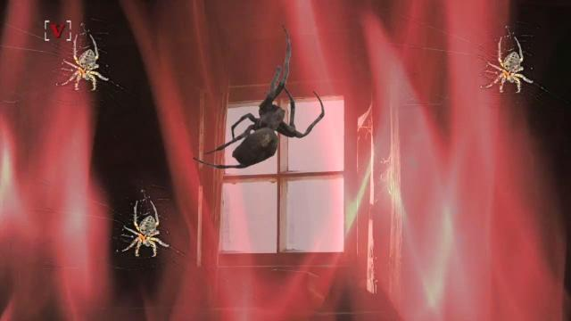 Man torches home trying to kill spiders