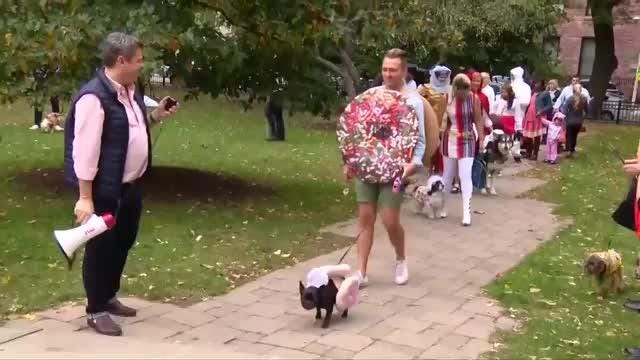 Halloween pooch parade in Chicago