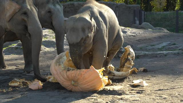 "Kids and animals get spooky for zoo's ""Howloween"""