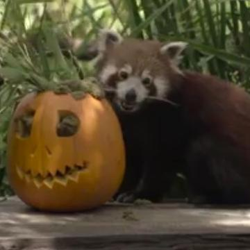 Think trick-or-treating's only for humans? Think again!