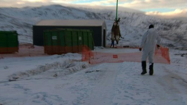 More than 100 reindeer killed by freight train in Norway