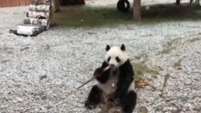 These animals are so ready for winter