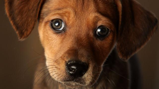 Dogs could increase owner's lifespan